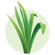 LocalFoody - Find Good Food